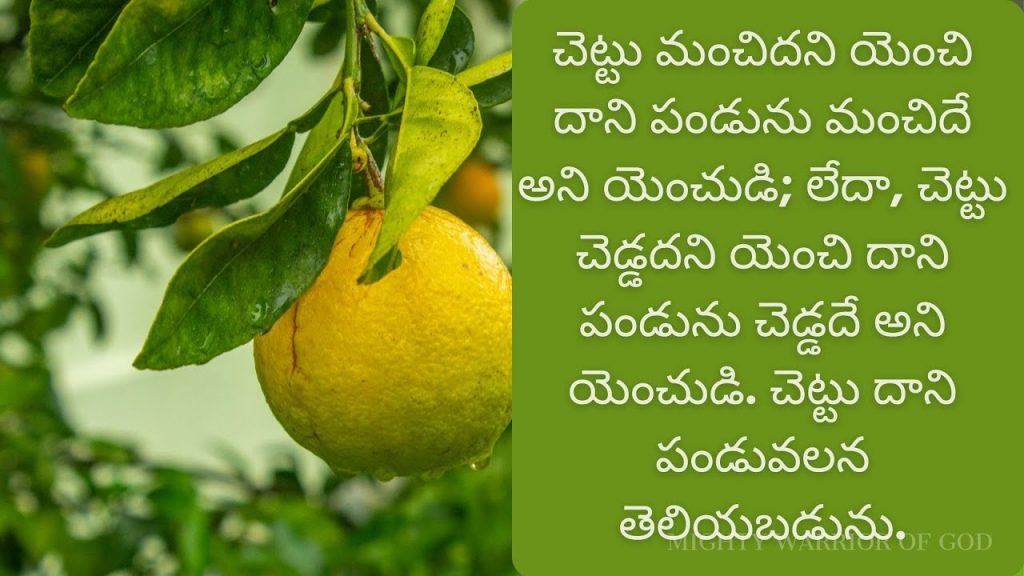 MATTHAYE 12 | TODAY'S SCRIPTURE | A TREE IS RECOGNIZED BY ITS FRUIT | TELUGU AUDIO BIBLE